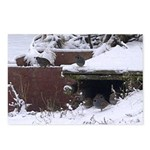 Quail in the snow Postcards (Package of 8)