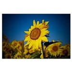Sunflower Large Poster