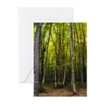 Woods Greeting Cards (Pk of 10)