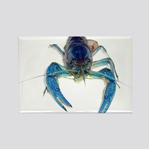 Blue Crayfish Rectangle Magnet