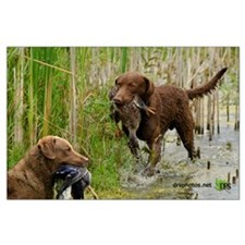 Chesapeake Bay Retriever Large Poster