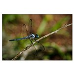 Dragonfly Large Poster