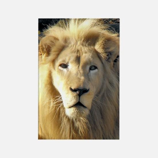 White Lion Portrait Rectangle Magnet