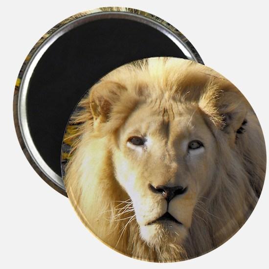White Lion Portrait Magnet