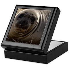 NORTHERN ELEPHANT SEAL PUP - Keepsake Box