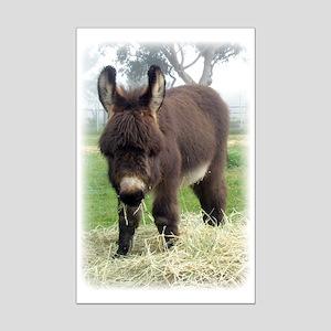 Mini Poster Print - Donkey Foal