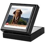 Sabu the Asian Elephant Keepsake Box