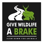 """B/w/g Give Wildlife A Square Car Magnet 3"""" X"""