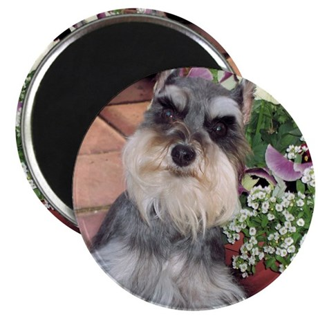 """Schnauzer and the Pansies 2.25"""" Magnet (10 pack)"""