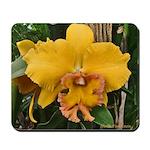 Yellow Cattleya Orchid Mousepad