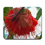 Rose of Venezuela #2 -Mousepad