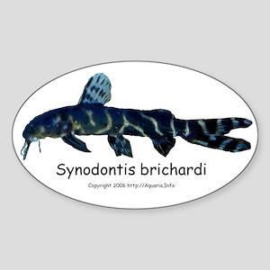 Synodontis brichardi Oval Sticker