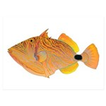 Orange-lined Triggerfish 5x7 Flat Cards (Set of 10