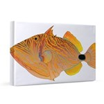 Orange-lined Triggerfish 20x30 Canvas Print