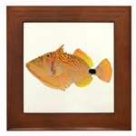 Orange-lined Triggerfish Framed Tile