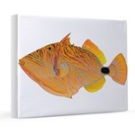 Orange-lined Triggerfish 8x10 Canvas Print