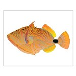 Orange-lined Triggerfish Posters