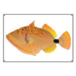 Orange-lined Triggerfish Banner