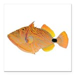 Orange-lined Triggerfish Square Car Magnet 3