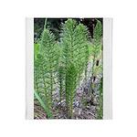 Horsetail Equisetum Throw Blanket