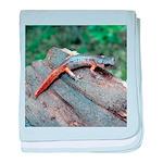 Ensatina Salamander baby blanket