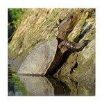 Pond Turtle Basking Tile Coaster