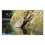 Pond Turtle Basking Sticker (Rectangle)