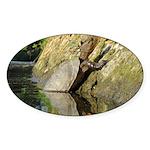 Pond Turtle Basking Sticker (Oval)