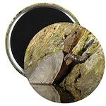 Pond Turtle Basking Magnet