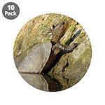 Pond Turtle Basking 3.5