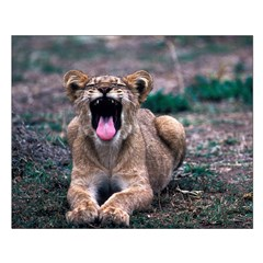 Lioness Yawning Posters