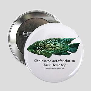 Cichlasoma octofasciatum Button