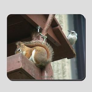 Squirrel in Birdfeeder Mousepad