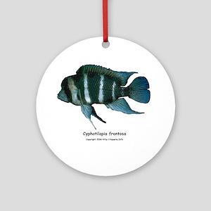 Cyphotilapia frontosa Ornament (Round)