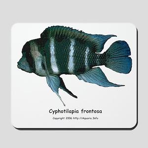 Cyphotilapia frontosa Mousepad