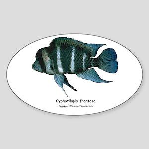 Cyphotilapia frontosa Oval Sticker