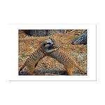 Meerkat Mini Poster Print