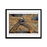 Meerkat Framed Panel Print