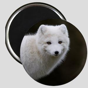 Arctic Fox Magnet