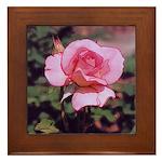 Pink Rose - Framed Tile
