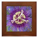 Purple passion flower - Framed Tile