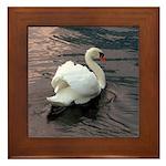 Swan #1 Framed Tile