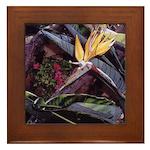 Bird of Paradise #1 Framed Tile