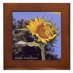 Flirting Sunflower - Framed Tile