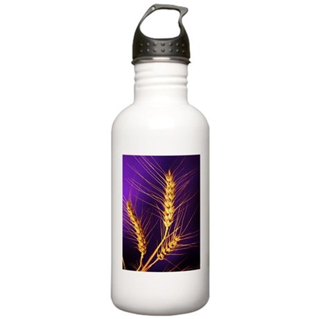Kansas Wheat Stainless Water Bottle 1.0L