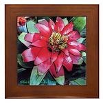 Red Bromeliad Flower Framed Tile