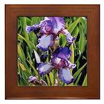 2 Irises - Framed Tile