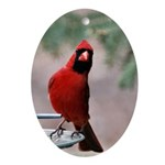 Red Cardinal Ornament (Oval)