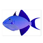 Niger Triggerfish Postcards (Package of 8)