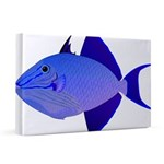 Niger Triggerfish 20x30 Canvas Print